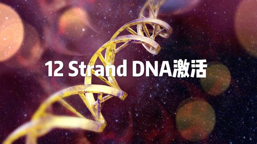 12 Strand DNA激活