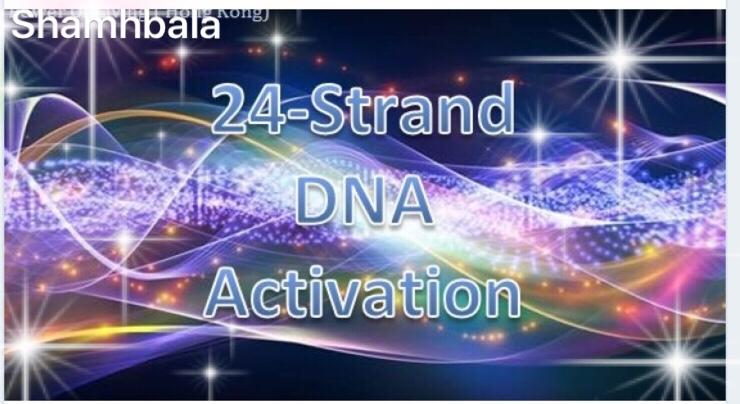 24 Strand DNA活化及閱讀服務